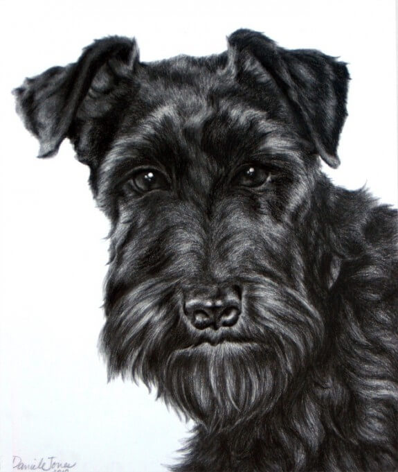 Schnauzer Drawing Easy: Dog Drawing Portraits Paintings, Charcoal